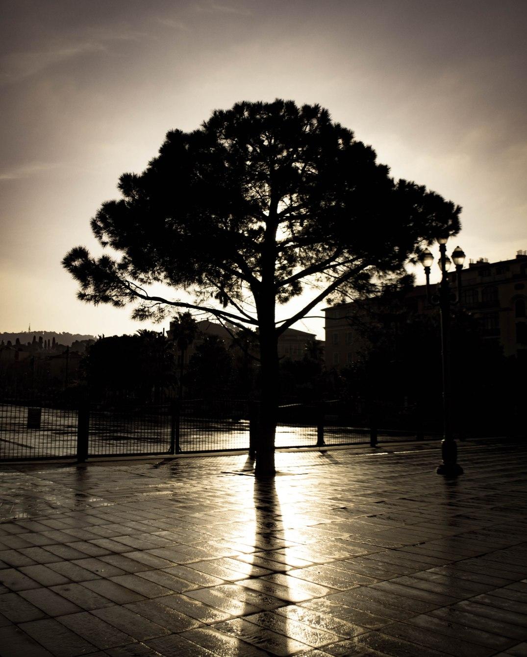 Baum gegenlicht