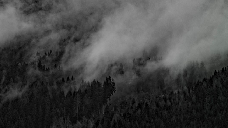 Bäume Nebel schwarz weiß