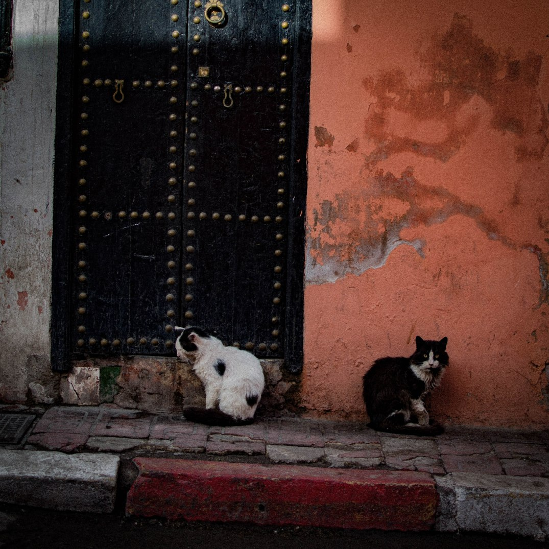 Marrakech Katzen