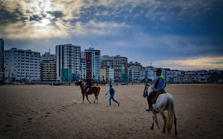 Tanger Pferd