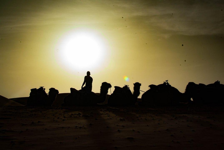 Wüste kamel gegenlicht