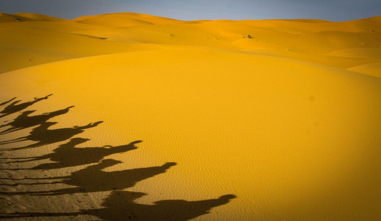 Wüste Kamel Schatten