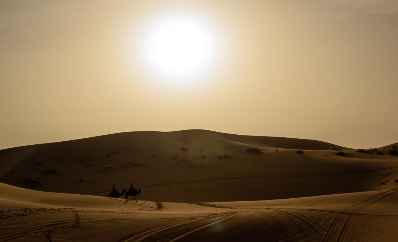 Kamel Sonne Wüste
